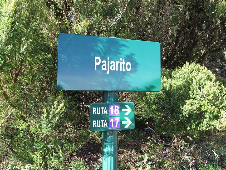 Pajarito - GR131 - Parque Nacional de Garajonay - La Gomera