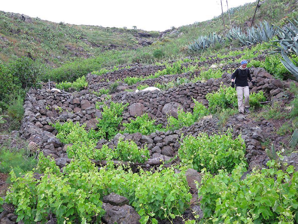 Teno Alto - Los Gigantes - Tenerife - la calabacera