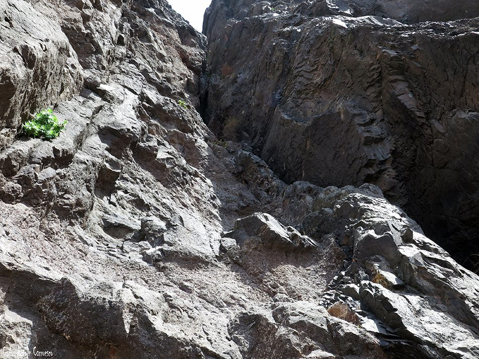 La Eco - Los Gigantes - Tenerife