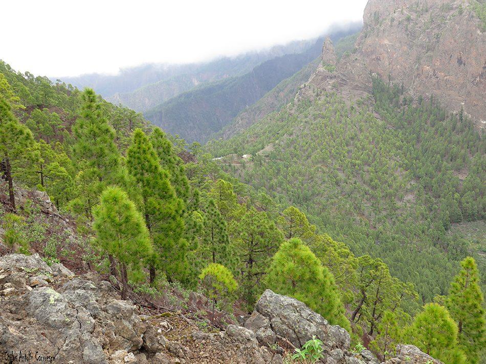 Pico Bejenado - Taburiente - La Palma - la cumbrecita