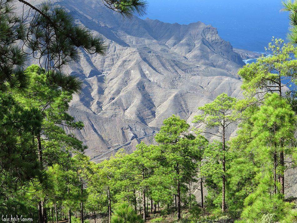 Faneque - Gran Canaria - tamadaba