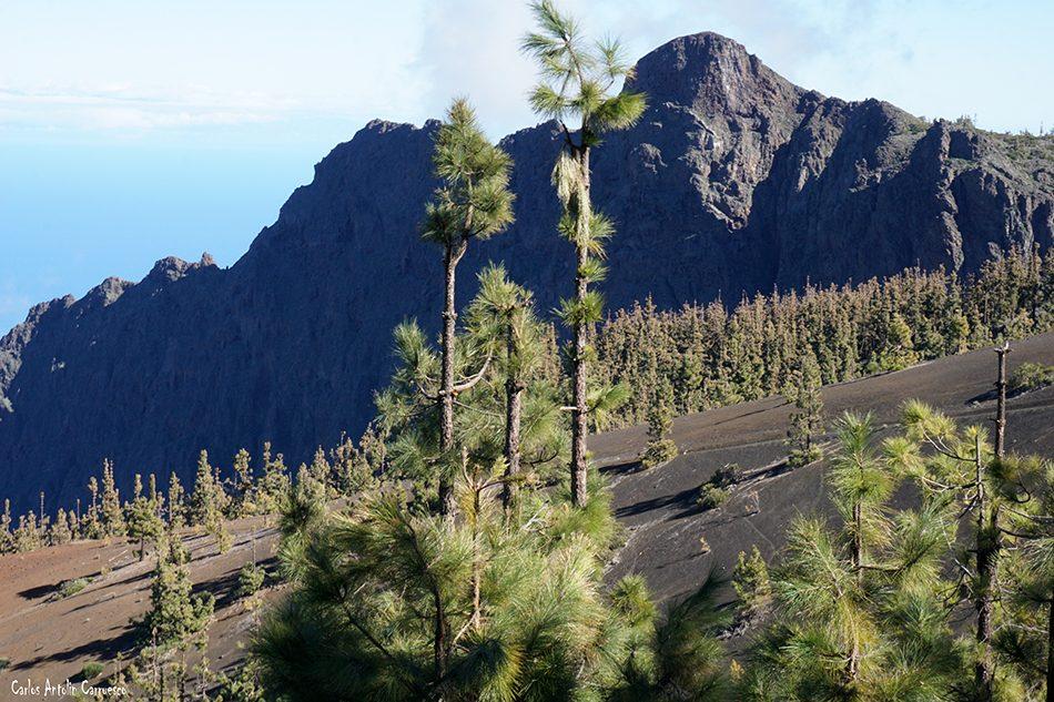 Carretera de La Esperanza - TF24 - Tenerife - pico del valle - cho marcial