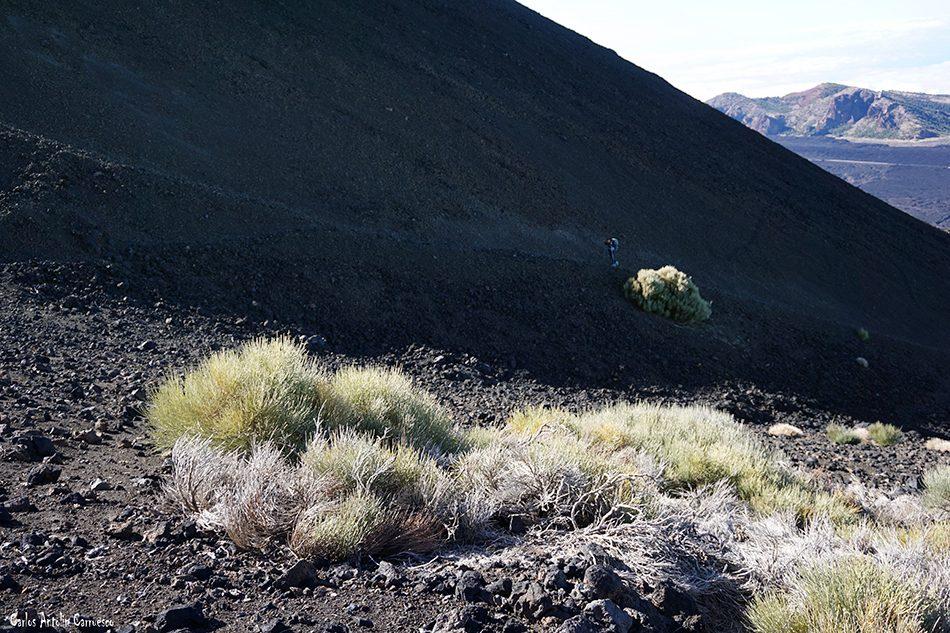 Los Quemados - Tenerife