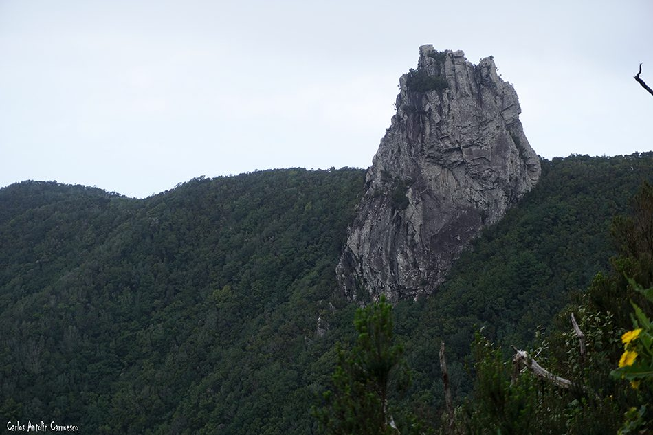 El Pijaral - Anaga - Tenerife - Anambro