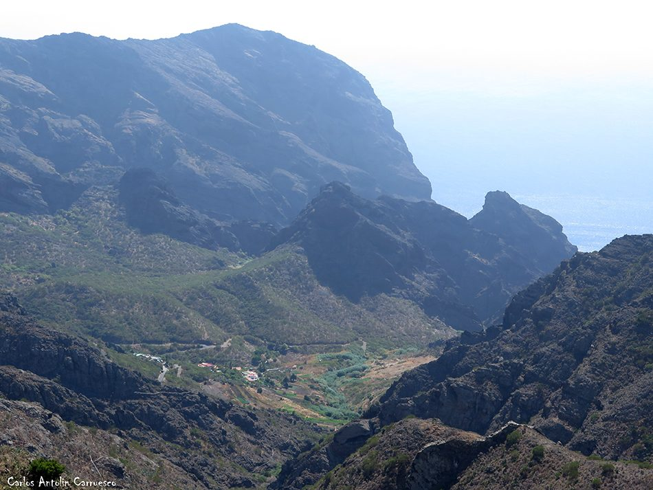 El Palmar - Cumbres de Baracán - Tenerife - carrizales