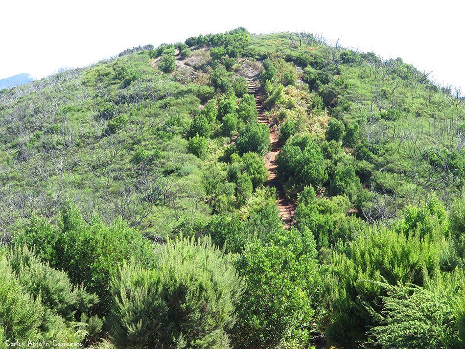 El Cedro - Garajonay - La Gomera